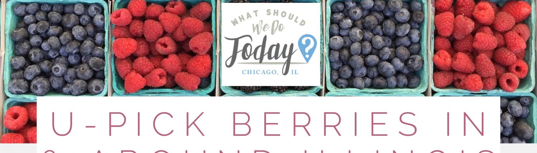 U-Pick Berry Farms near Chicagoland